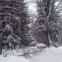Снежный январь 2016 :: Елена Семигина