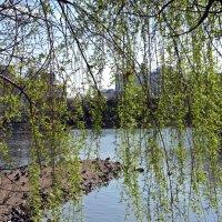 Весна! :: Вера Щукина