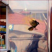Фотограф щелкает, и птичка вылетает. 2 :: Татьяна Цыганок