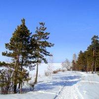 В один из предпоследних дней зимы. :: Мила Бовкун