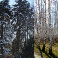 Зима встречается с весной... :: Тамара (st.tamara)