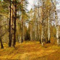 Осенний солнечный денек.. :: Алла Кочергина