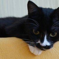 1 марта не только первый день весны,но и день кошек! :: Серж Поветкин