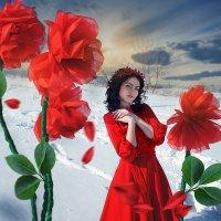 Цветочные сны :: Ольга Афонина