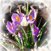 С первым днём весны! :: Nina Yudicheva