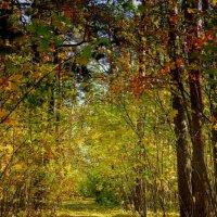 Вспоминая прошедшую осень... :: Laborant Григоров
