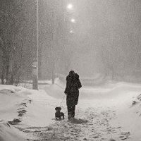 Дама с собачкой :: Антон Родионов