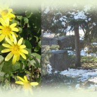 Пришла весна... :: Тамара (st.tamara)