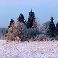 Зимний лес-панорама :: Бронислав Богачевский