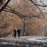 Весна ещё в начале... :: Владимир Болдырев