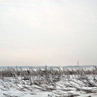 Поле, русское поле... :: Михаил Столяров