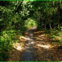 Дорожка в лесу :: Татьяна Пальчикова