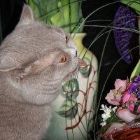Люблю праздники.... и цветочки:))) :: Марина Назарова