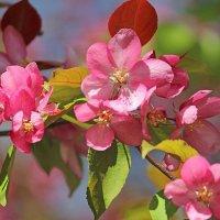 Все в розовом цвете... :: И.В.К. ))