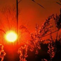 Опять на даче встретил я закат :: Николай Сапегин
