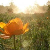 Здравствуй солнце! :: Андрей
