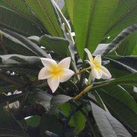 Южные цветы :: Irine kolesova