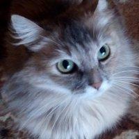 Злая кошка :: Дима Вахрушев