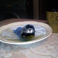 Собака попрошай :: Вячеслав Егоров
