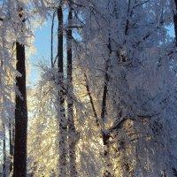 Мороз и солнце :: Елена Майорова