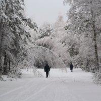 на прогулку в весенний лес :: Yana Odintsova