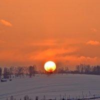 Солнце садится за деревья :: Нина Штейнбреннер