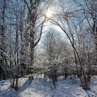 Последний зимний день :: Paparazzi