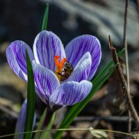 Как-то, весной...(и з архива). :: Павел Петрович Тодоров