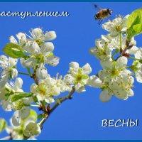 **** :: Светлана
