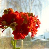 цветы на подоконнике :: Леонид Натапов