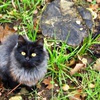 Зарайская кошка :: Денис Кораблёв
