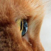 глаз кошки :: Борис Иванов