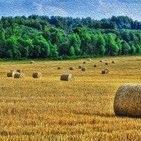Немного летних красок :: Андрей Куприянов