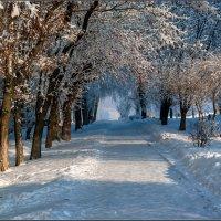 Зимняя аллея :: Александр Лихачёв