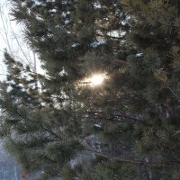 "Лесной зимний ""чирК"" :: opifeX Onis"