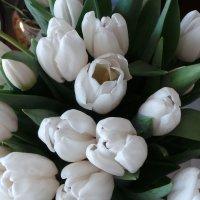 Белые тюльпаны :: Валентина Юшкова