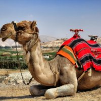 Camel :: Евгений Балакин