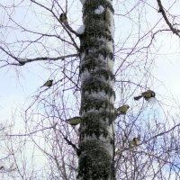 Птицы щебечут ! :: Мила Бовкун