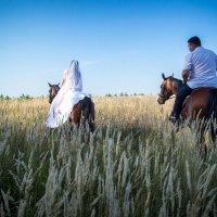 Молодожёны в поле на лошодях :: Александра Андрющенко