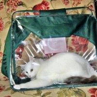Кот в мешке :: ivolga