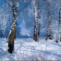 Зимняя лазурь :: Александр Лихачёв