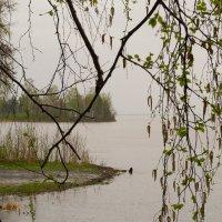 Дождь :: Serge Serebryakov