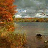 осенью на озере :: Alex