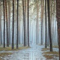 Прогулка по весеннему лесу. :: Laborant Григоров