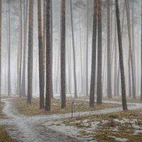 Весенние стёжки - дорожки. :: Laborant Григоров