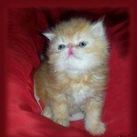 Мой маленький котёнок... смышлёный и пушистый... :: Людмила Богданова (Скачко)
