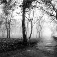 В белом пламени тумана :: Vladimir Shapoval