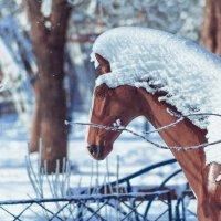 Снежная Лошадь :: Оксана Летняя