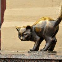 Кошка :: Юрий Тихонов