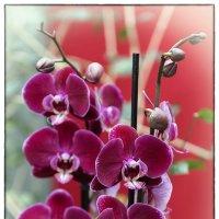 Архидеи. Ботанический сад. 5. :: Jossif Braschinsky